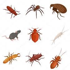 شركة مكافحة حشرات بالداير
